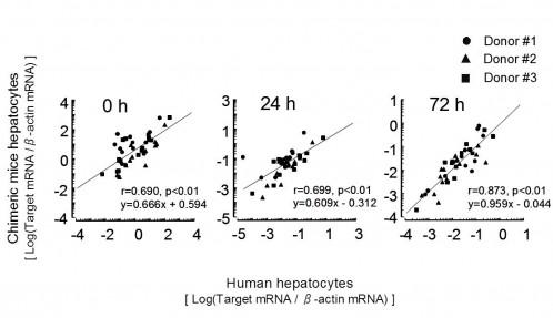 fig1:Human hepatocytes