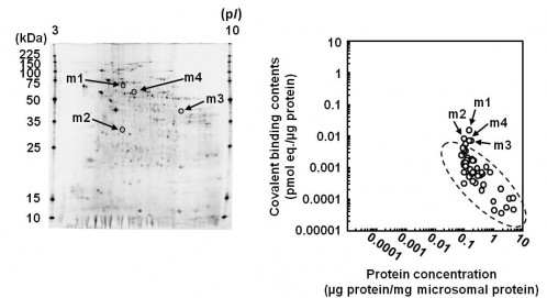 fig2:Protein contentration