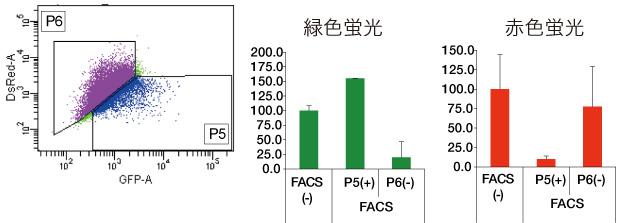 Fig.4 FACSにより、緑色蛍光細胞 (CYP3A4陽性細胞)を単離