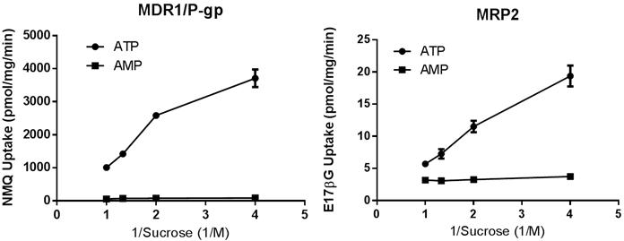 図3.トランスポーター発現ベシクルによる基質取り込み活性のショ糖濃度依存性