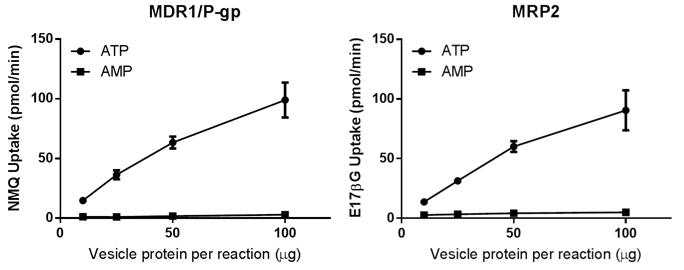 図5.ヒトMDR1/P-gpベシクルとヒトMRP2ベシクルの基質取り込みのタンパク量依存性