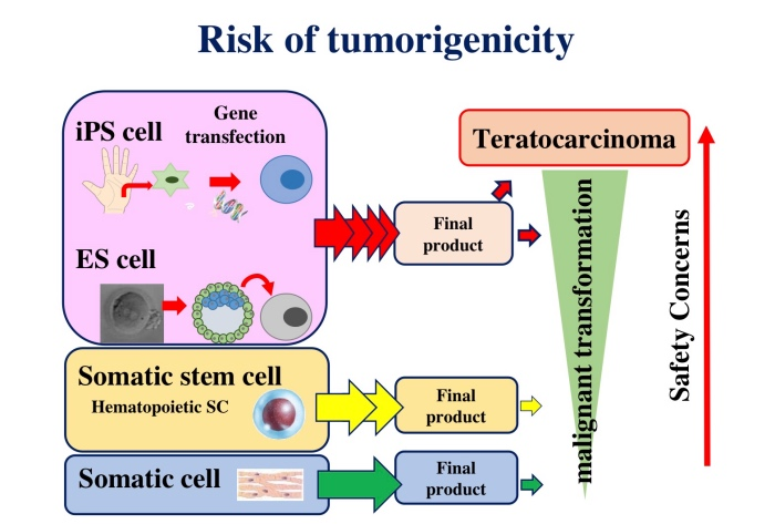 図2:Risk of tumorigenicity
